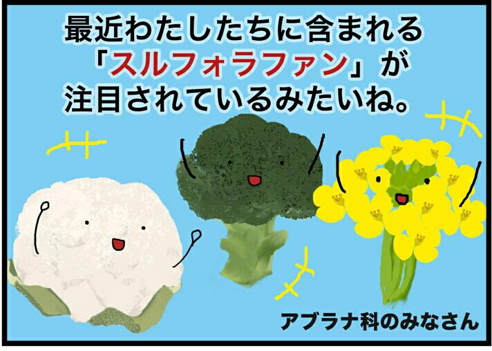 【健康啓発4コマ漫画】サンプル「スルフォラファン」「男性の乳がん」